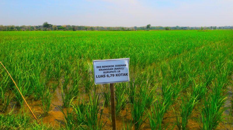 Survey Tanah Sawah Aset Milik Pemerintah Kota Madiun di Wilayah Kelurahan Josenan